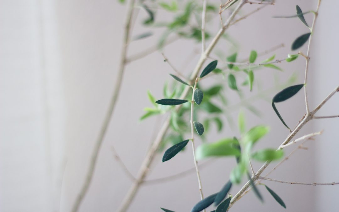 What I Learned from my Olive Tree